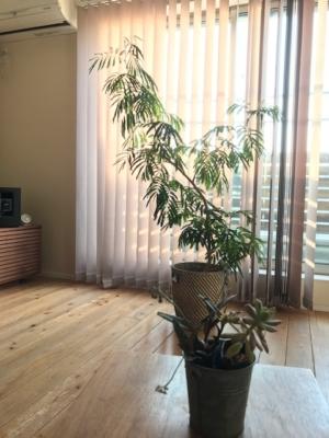 観葉植物と多肉植物